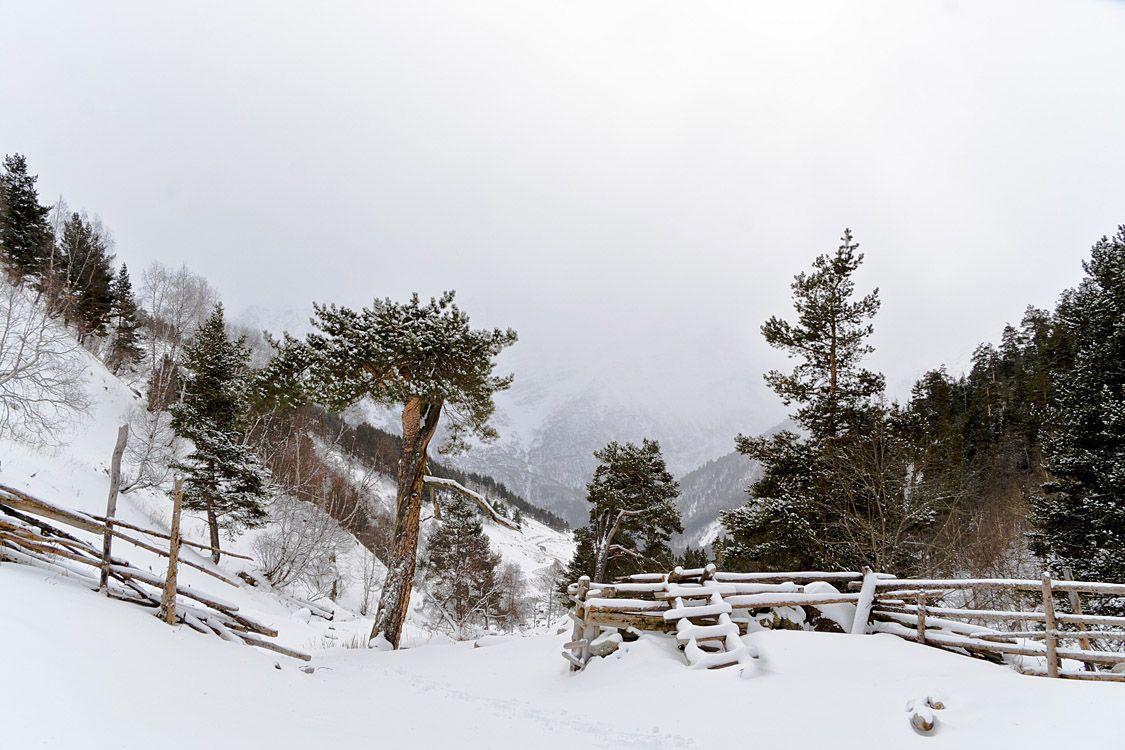 Winter in Terskol, Kabardino-Balkaria | Terskol, gorge, winter, snow, white, mountain  , trees, pines, Kabardino-Balkaria, hillside