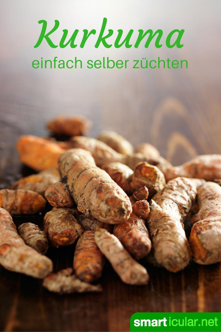 So einfach kannst du täglich von den gesunden Inhaltsstoffen des Kurkuma profitieren! Hier findest du eine Schritt für Schritt Anleitung für den Eigenanbau. #kräutergartenbalkon
