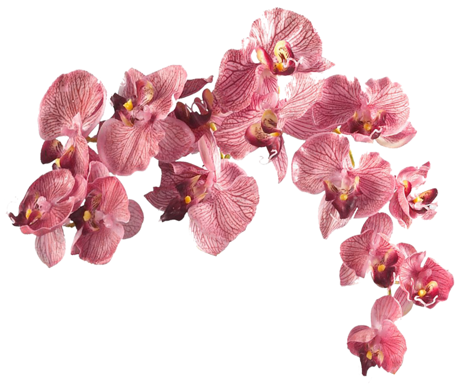 Real Flowers Png Flower 003 - Clear Cut...