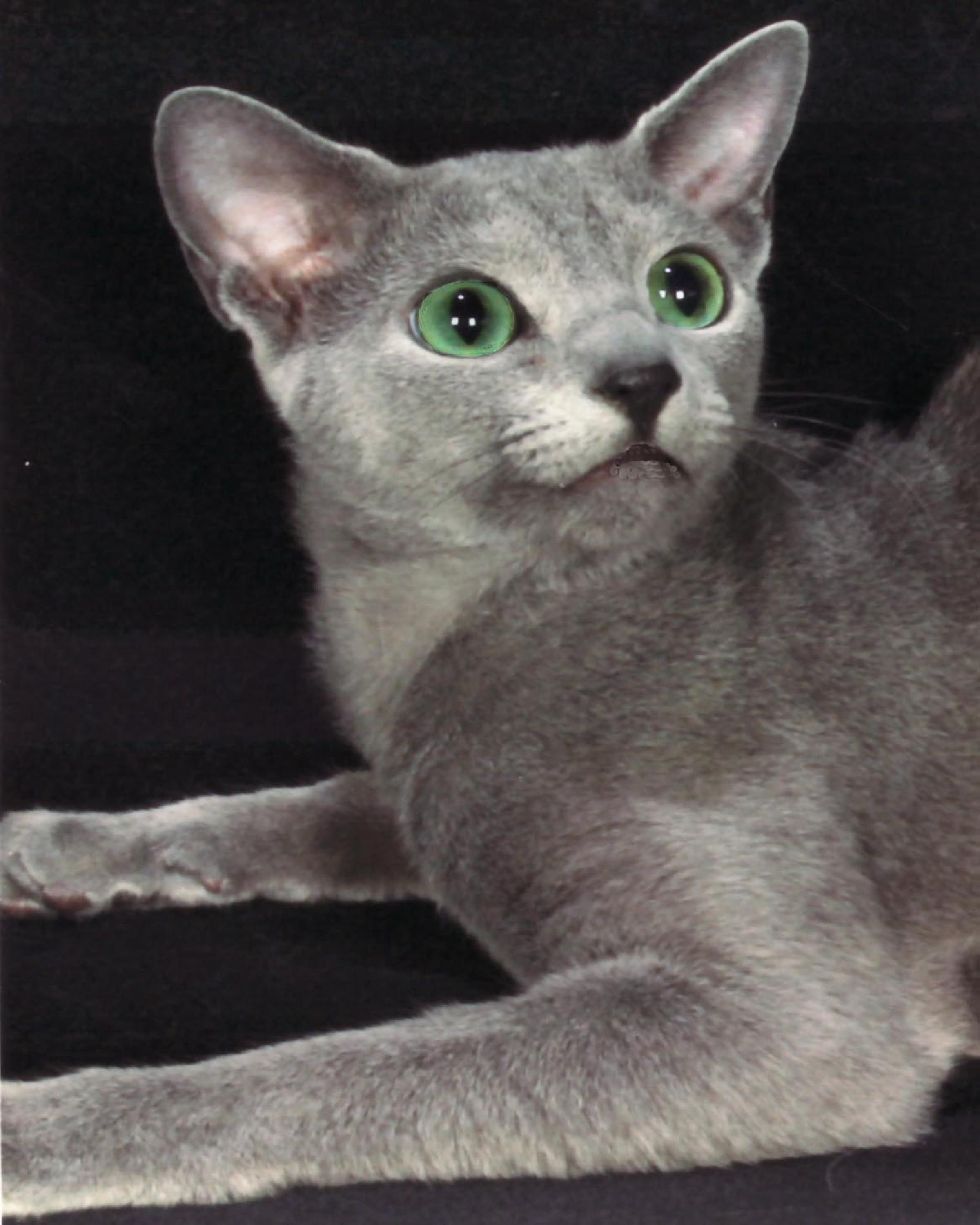 The Classic Emerald Green Eyes It S A Very Distinctive Green