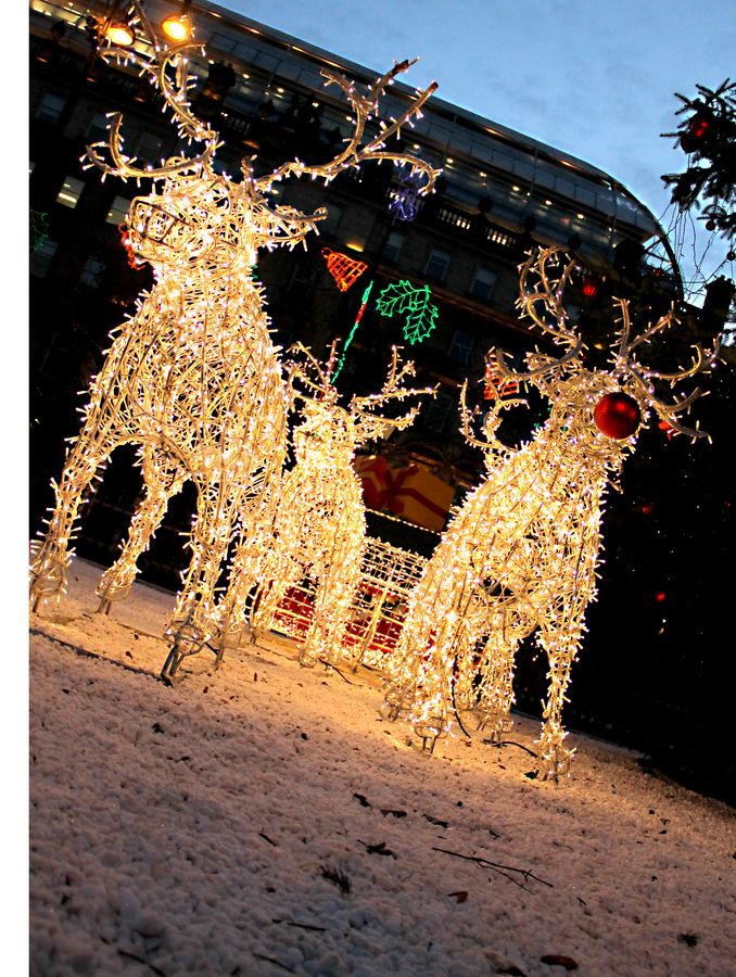 Christmas Reindeer, Glasgow, Scotland, UK - Christmas Reindeer, Glasgow, Scotland, UK All About Christmas
