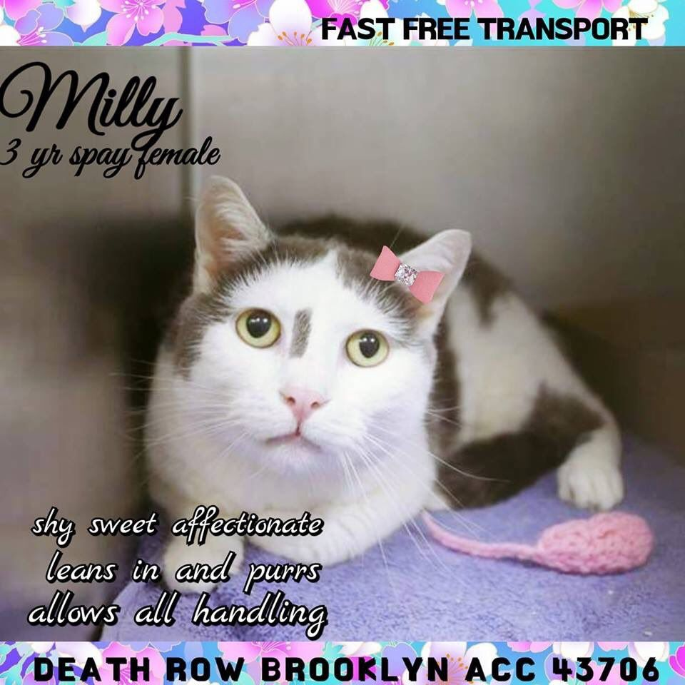 Catsrangels2 On Twitter Cats Foster Cat Cat Adoption