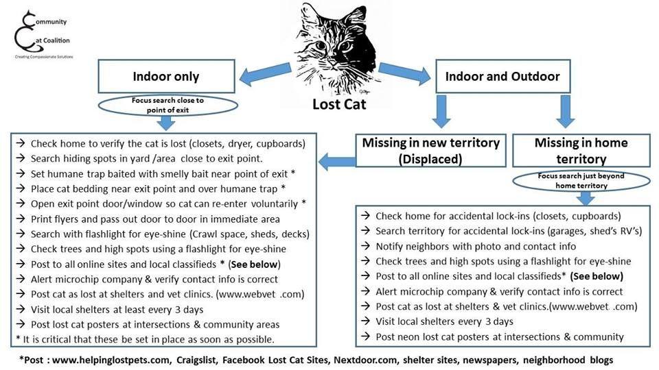 Lost Cat Checklist Lost Cat Losing A Pet Cats