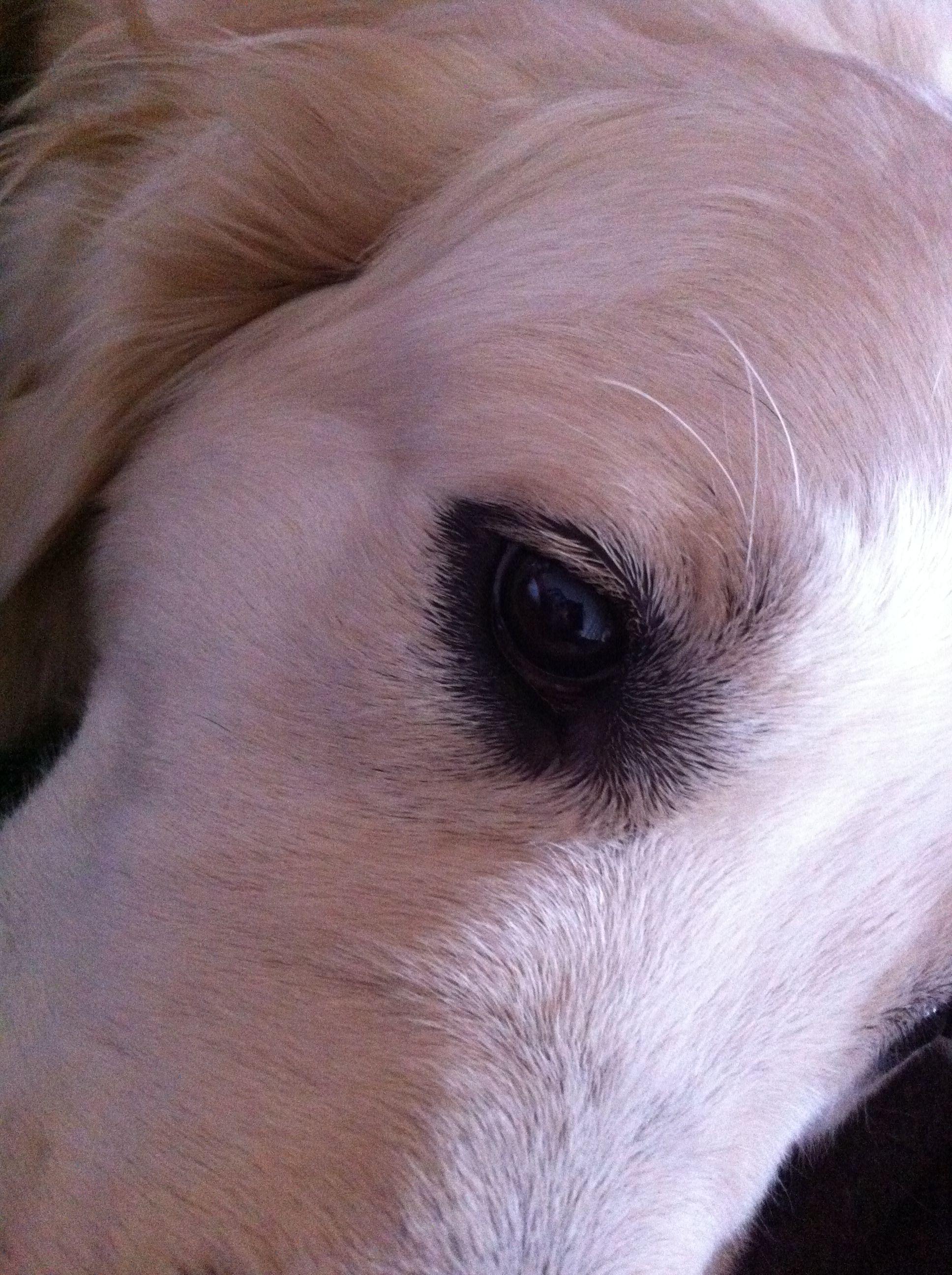 Aslan's eye