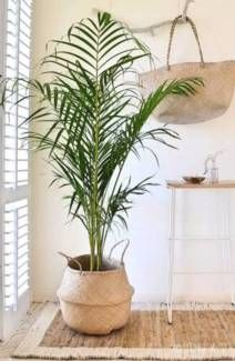 Handmade Seagrass Belly Basket Planter Plant Storage Collapsible Other Home Decor Gumtree Australia Adelaide City Adelaide Cbd Simple Living Room Decor Plant Decor Interior Plants