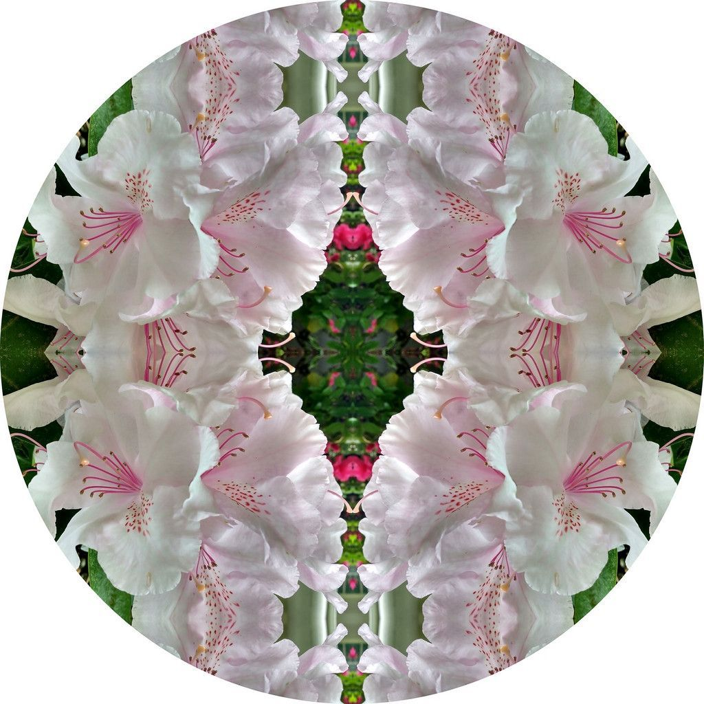 Blooming Rhododendron Nature Themed Fabric Wall Sticker (Circle)