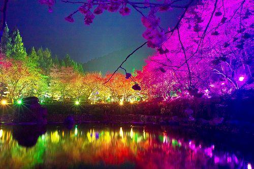 Formosan Aboriginal Culture Village Nantou County Taiwan Cherry Blossom Festival Landscape Photography Scenery Cherry Blossom Festival