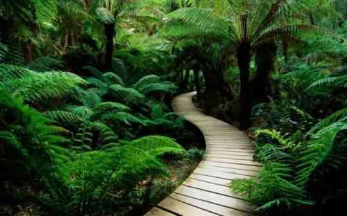 All e de jardin en bois esth tique et facile faire promenade en sous bois all es jardin - Allee de jardin facile ...
