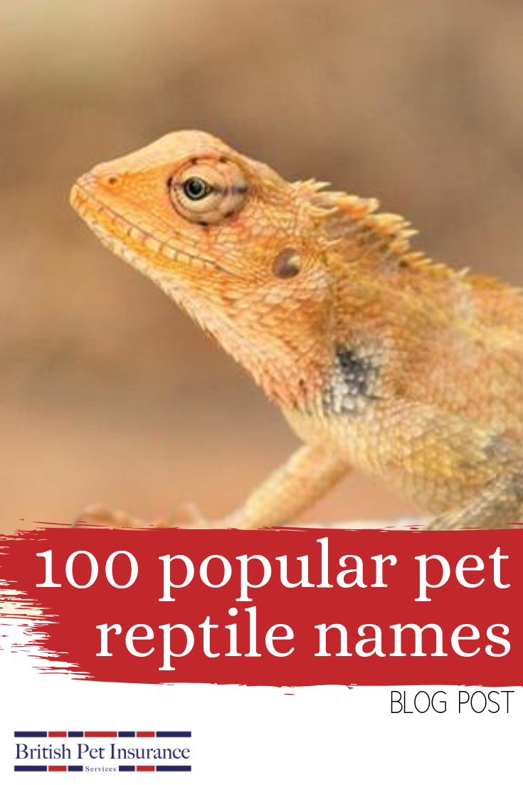 Pin on Exotic Pets Blogs