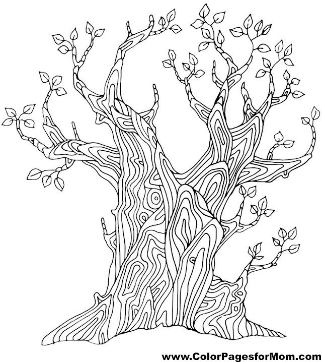tree coloring page 2 Trees of All Kinds Pinterest Adult
