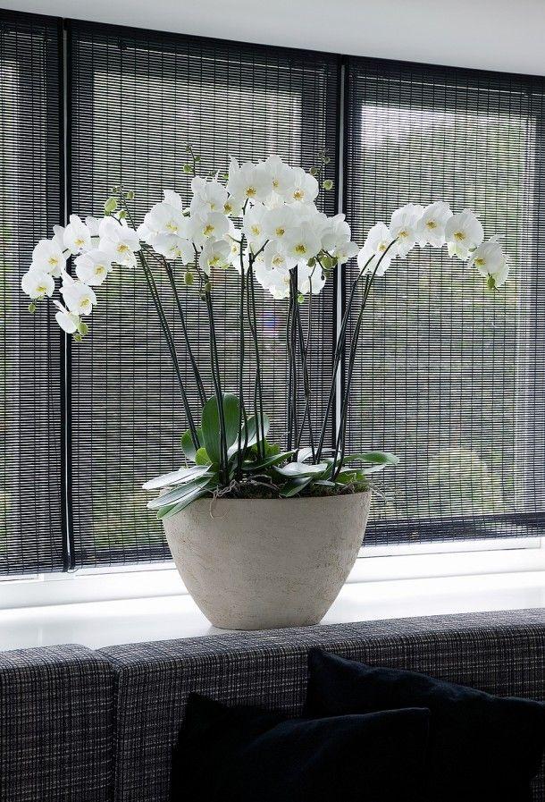 Bloemen en planten voor in huis | Witte orchidee in strak interieur. Door Tamara