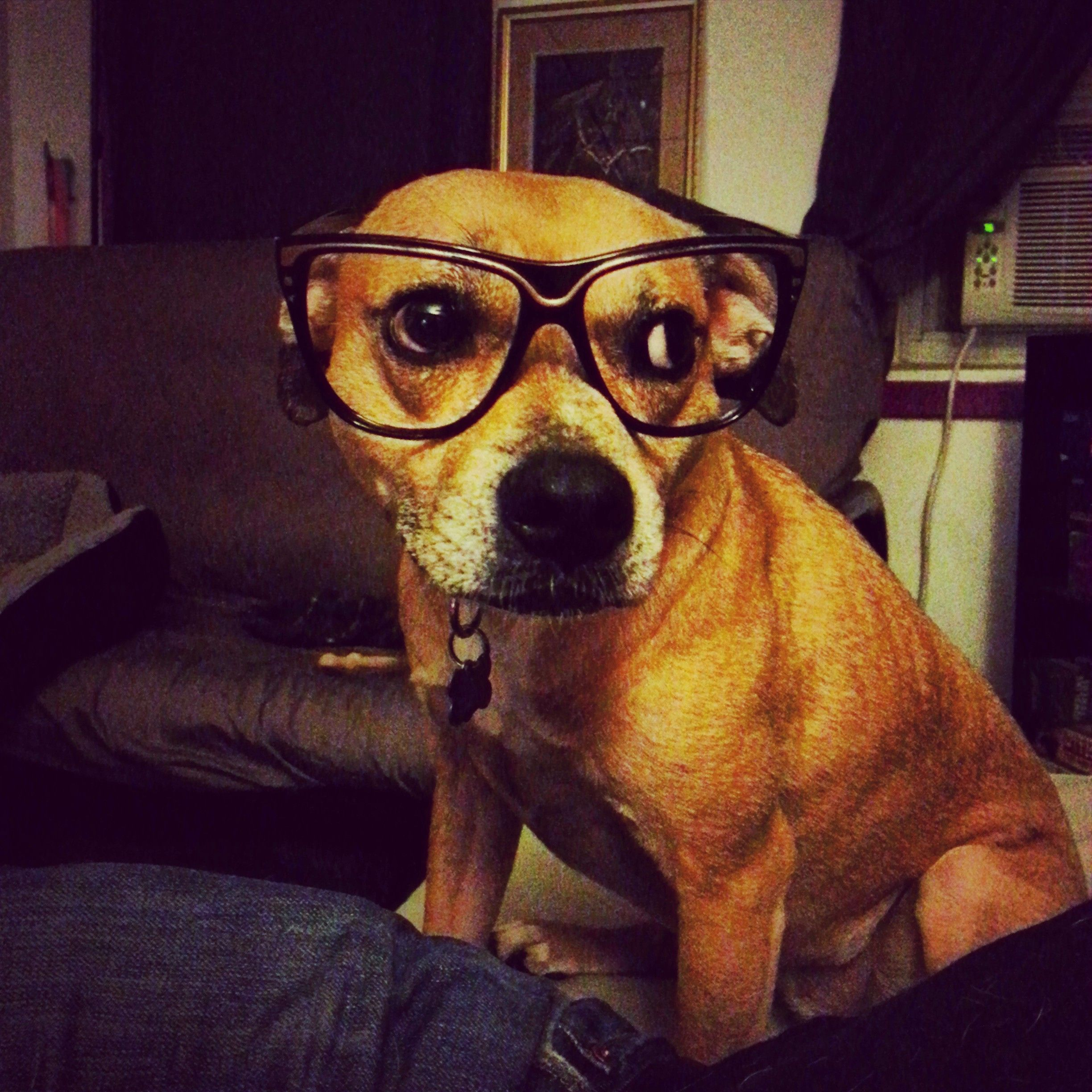 Peanut is such a hipster nationaldressupyourpetday pet