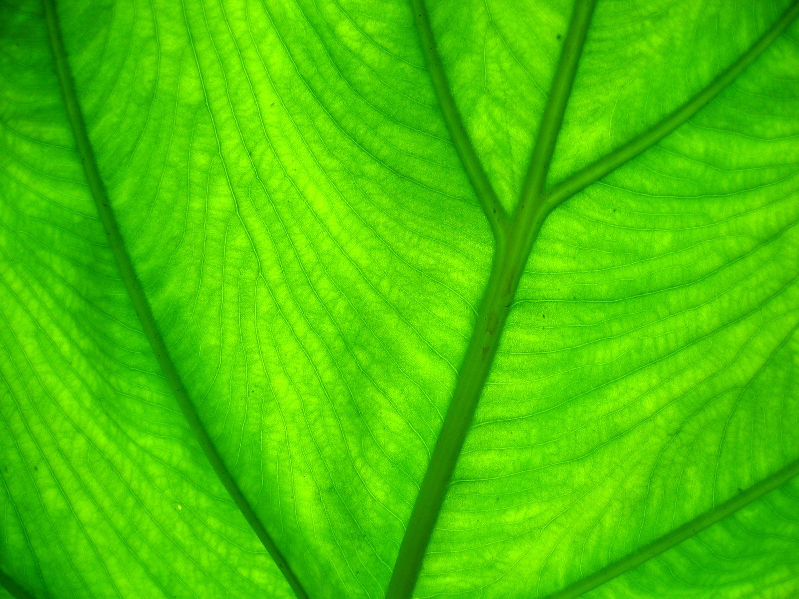 light green leaves background - photo #5