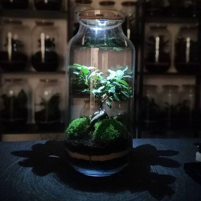 Led Light Terrarium Bonsai