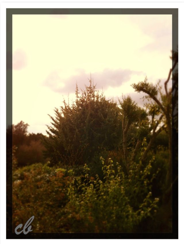 autumn morning in grey