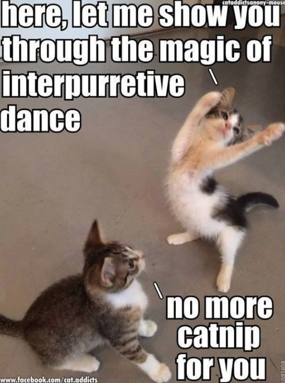 17 Cats That Might Have Had Too Much Catnip Funny Cat Memes Funny Animal Jokes Funny Animal Quotes