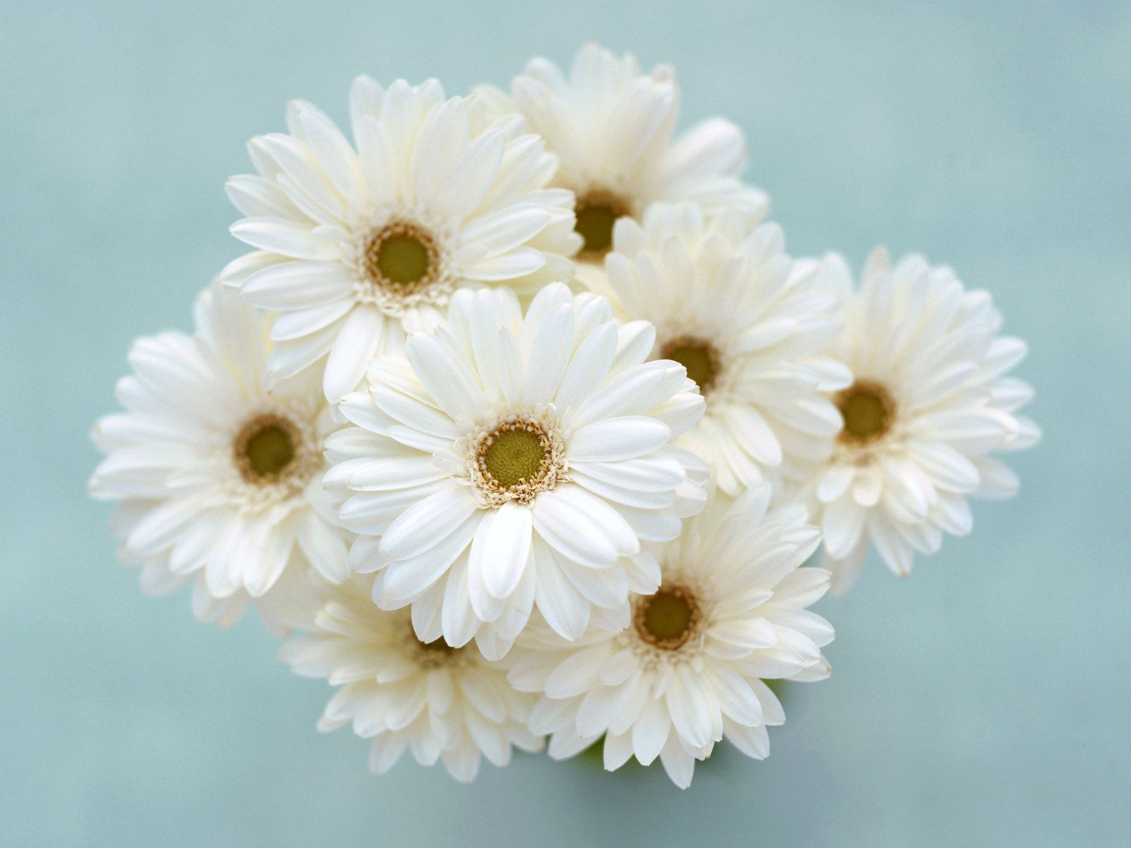 What Type Of Flower Is This Flowers Pinterest Flower And Flowers
