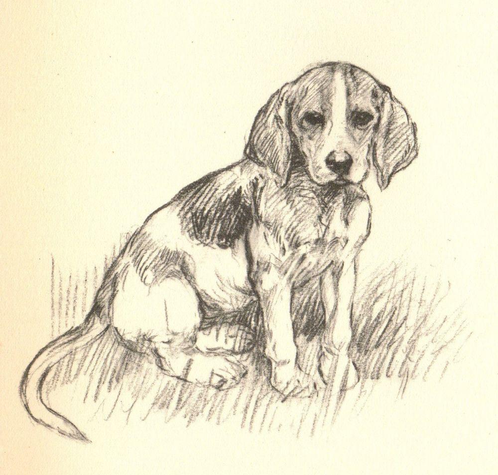 1930s Antique Beagle Dog Print Original Vintage Puppy Print Pet