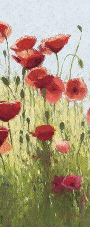 Mountain Poppies I  by Shirley Novak
