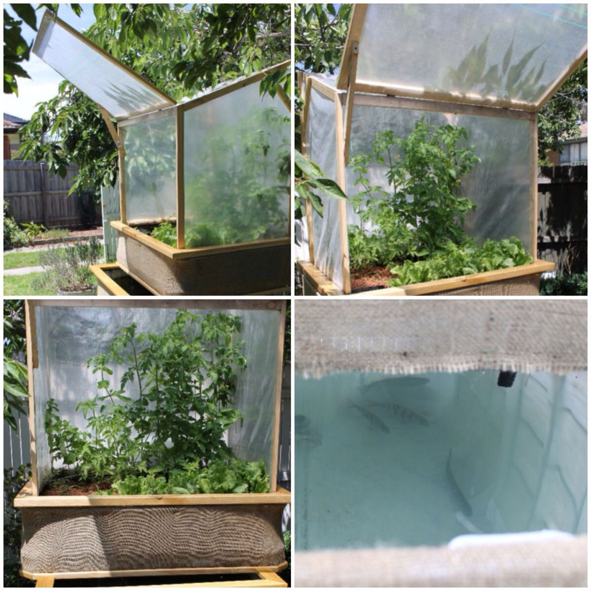 Aquaponics growing food pinterest diy and crafts for Arizona aquaponics