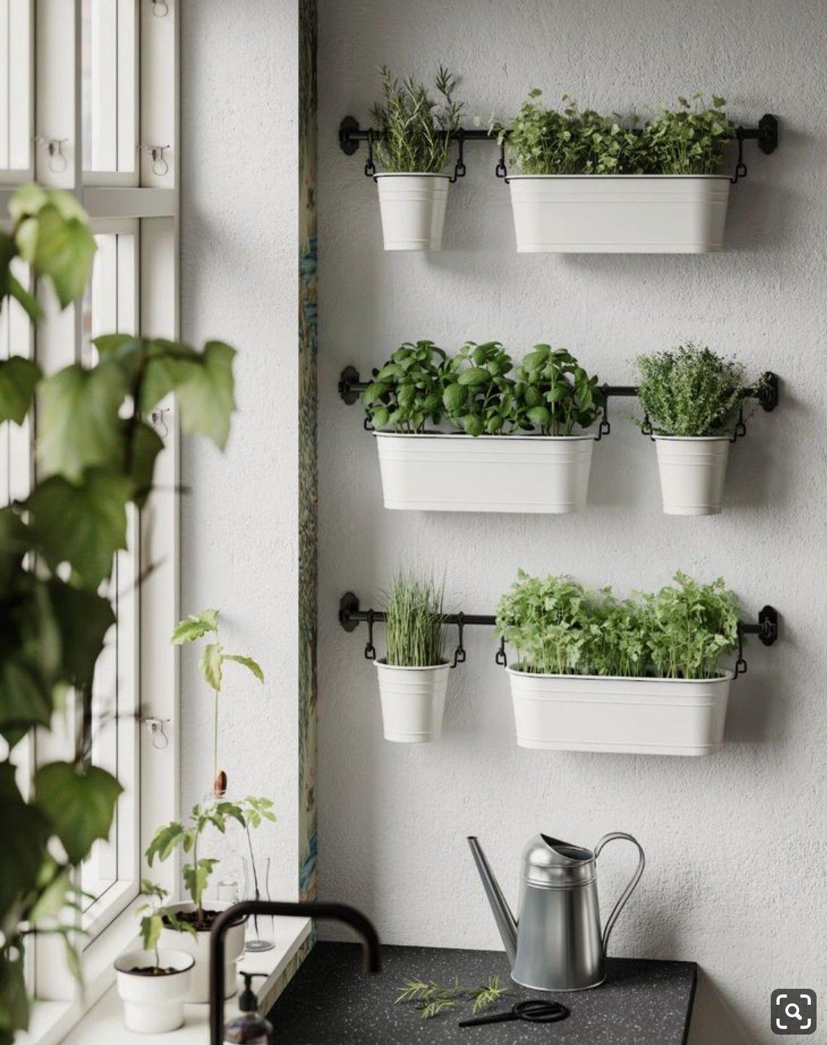 Kitchen Herb Garden Indoor