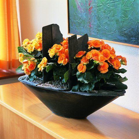 Z11065656q Begonia Zimowa Begonia Elatior Kwiaty Doniczkowe Jpg 480 481 Begonia Planter Pots Planters