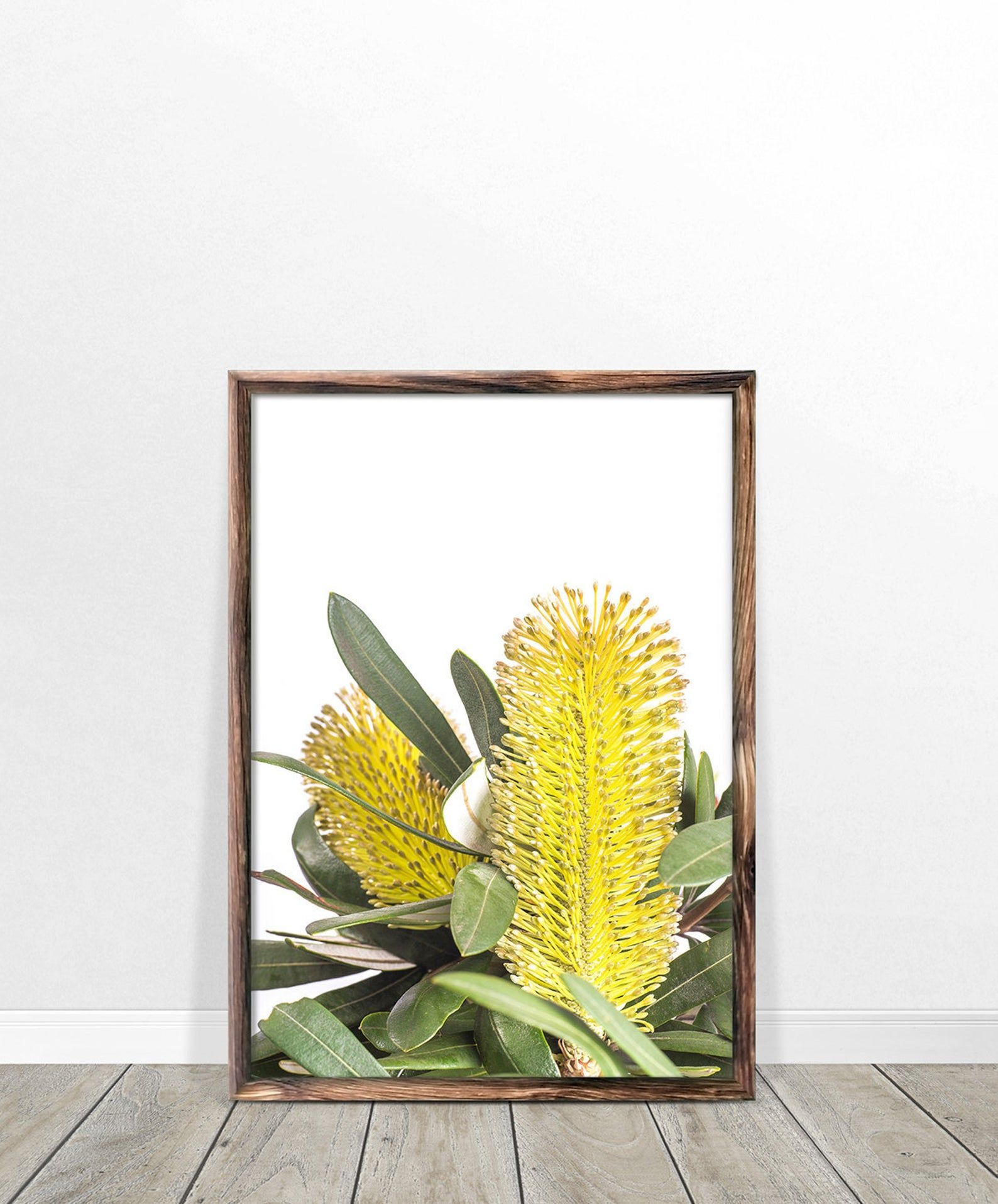 Banksia Print Digital Download Australian Native Photography Flower Wall Art Yellow Flower Print Australian Flowers Botanical Native Print In 2020 Flower Wall Art Flower Art Yellow Flower Print