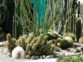 Front Yards Cacti And Succulents With Images Cactus Cacti