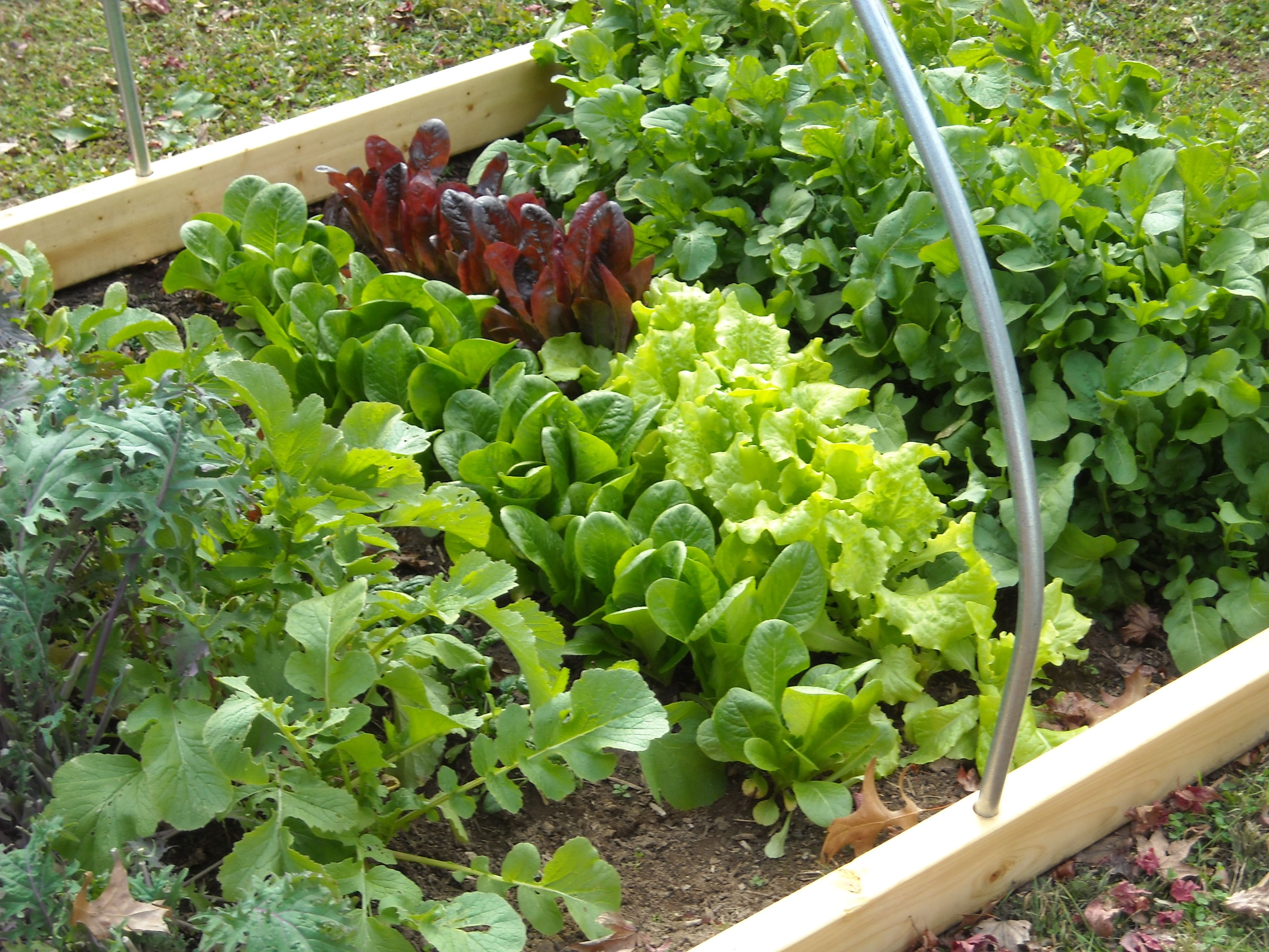 organic horticulture is the science and art of growing fruits