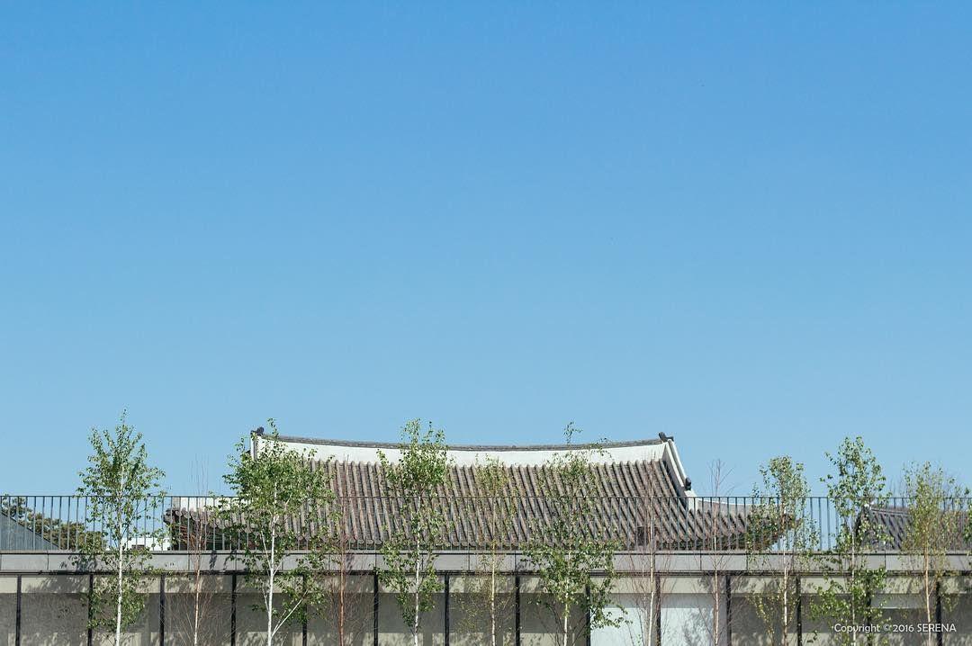 #쨍쨍  . #roof #tile #tileroofedhouse #tree #sky #blue #100D #SERENA_100D #landscape #townscape #skyscape #ig_good #canonkr #KR #canon #canon100d #canonimagestorming #ig_flower #기와 #나무 #사진 #하늘 #맑음 #날씨굿 #감성 by serena_aa