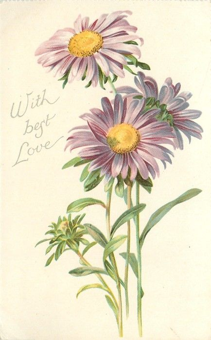 With Best Love Purple Daisies With Yellow Centers Tuckdb Flower Drawing Botanical Drawings Flower Painting