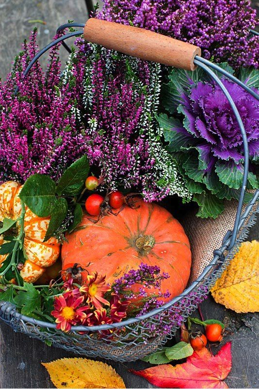 4 Ways To Beautify Your Autumn Balcony Or Terrace Fall Container Gardens Fall Patio Garden Angels