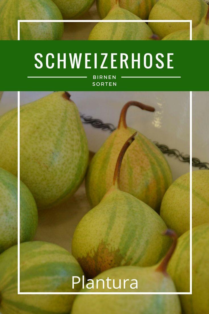 Schweizerhose Plantura Birnensorten Rezepte Mit Obst Birne