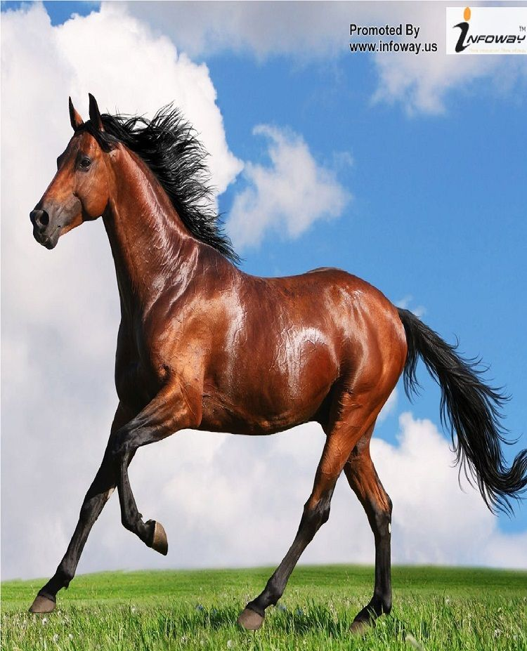 Running Horse Hd Wallpaper Download High Quality Wallpaper Horses