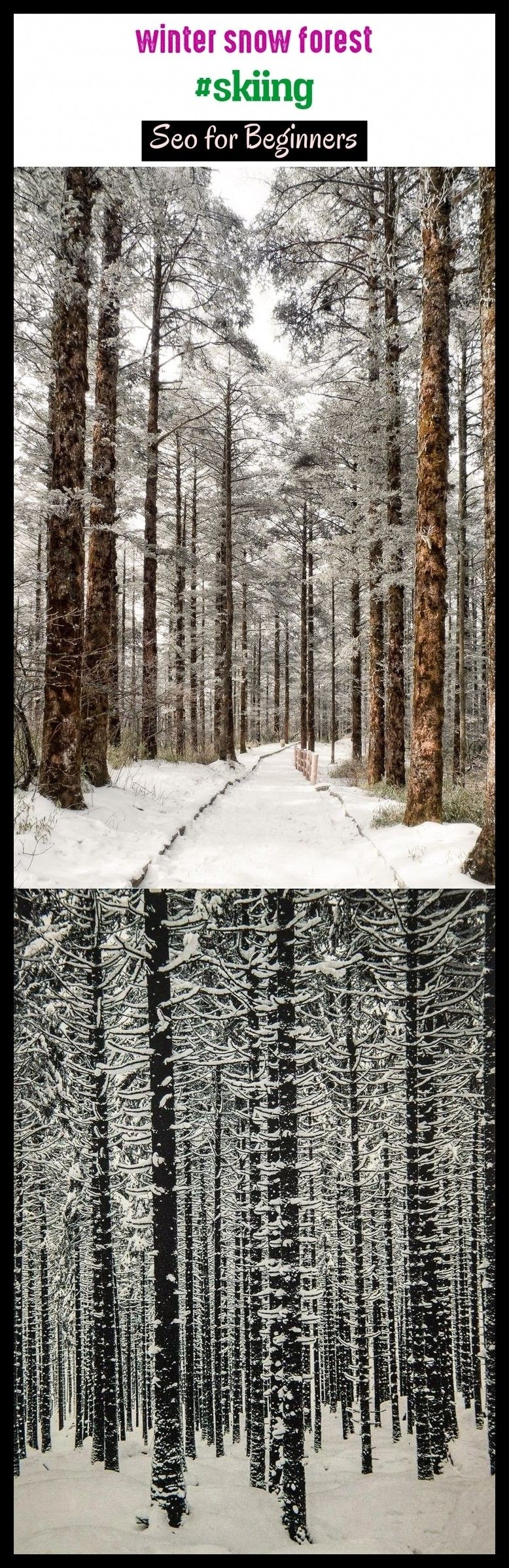 , Winter snow forest #skiing #seotrends #outdoors. winter snow photography, winter snow christmas, winter snow scenes, winter snow flakes, winter snow w…, My Winter Blog 2020, My Winter Blog 2020