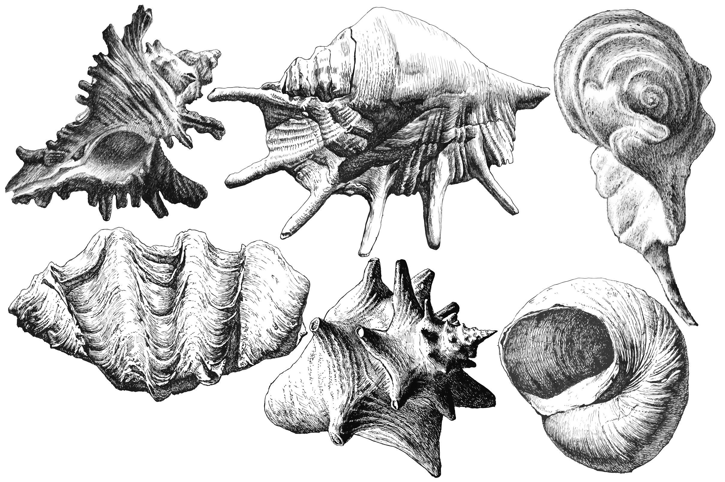 Realistic seashells. by rednex on @creativemarket