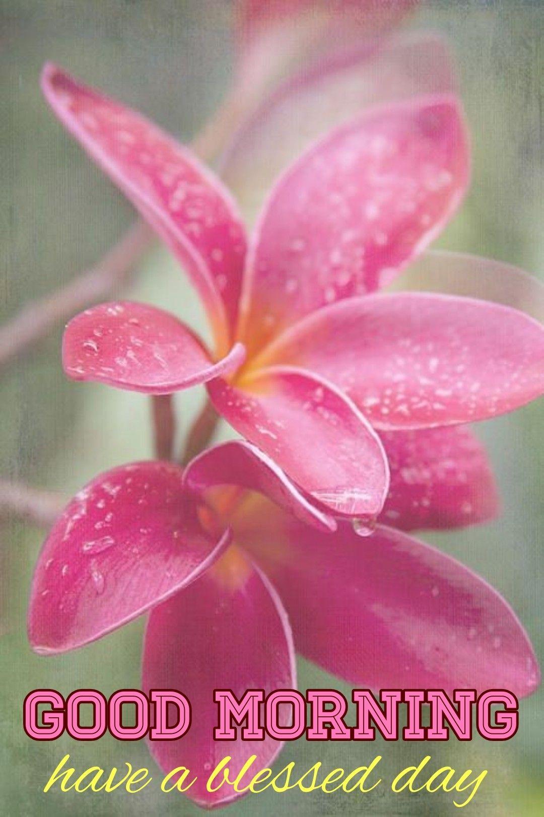 Pin By Gopi Srichandan On Good Morning In 2020 Beautiful Flowers Photos Amazing Flowers Plumeria Flowers