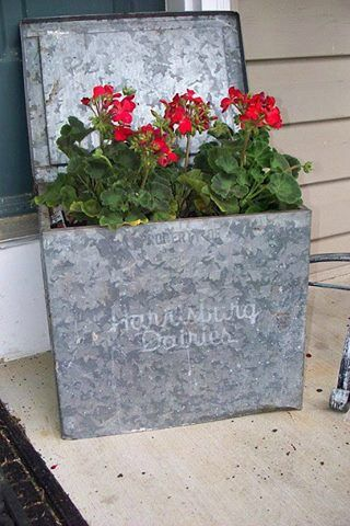 Vintage Galvanized Milk Box We Used To Have One On Our Stoop For Deliveries Milk Box Flower Pots Red Geraniums
