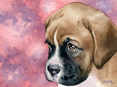 Boxer Puppy Art Print Watercolor By Artist Dj Rogers Boxer Puppies Dog Art Dog Paintings