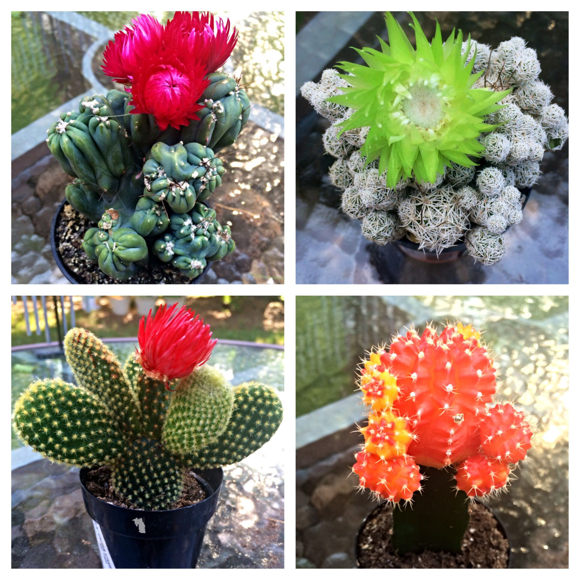 My beautiful cactus collection From left to right top to bottom