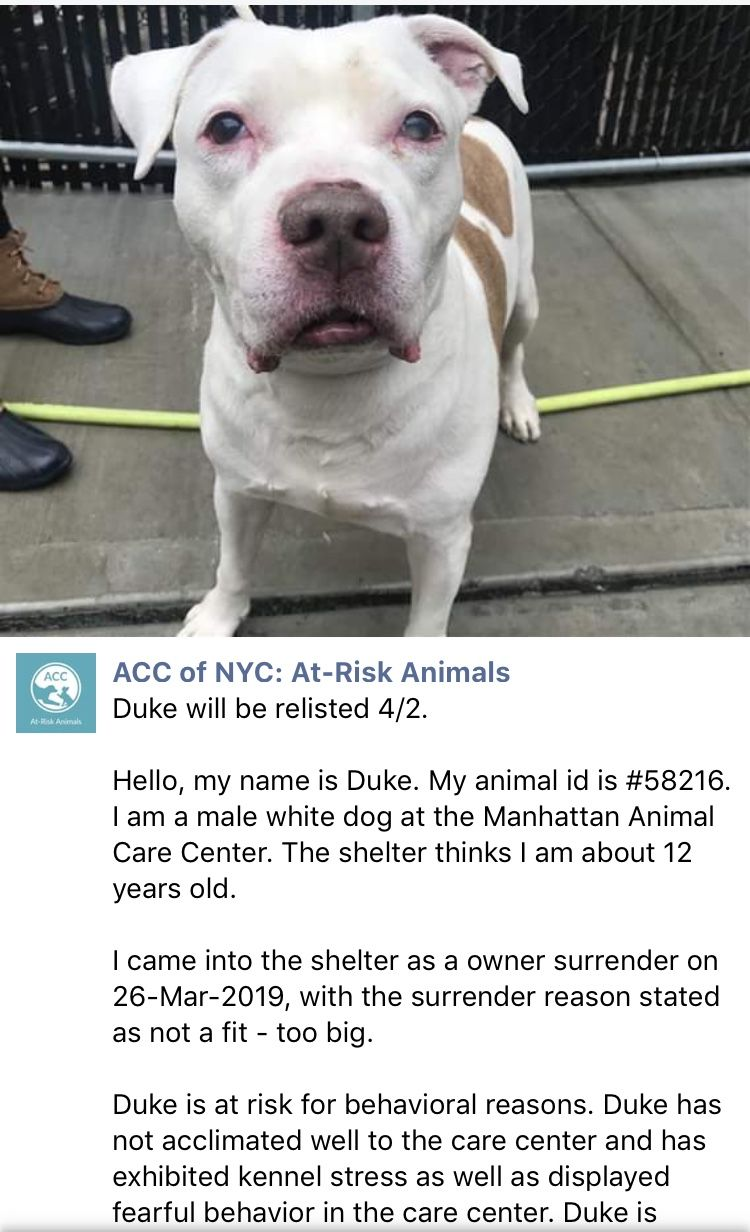 Precious Duke Relisted To Die 4 4 19 Ij2 Elderly Dogs Animals Old Dogs