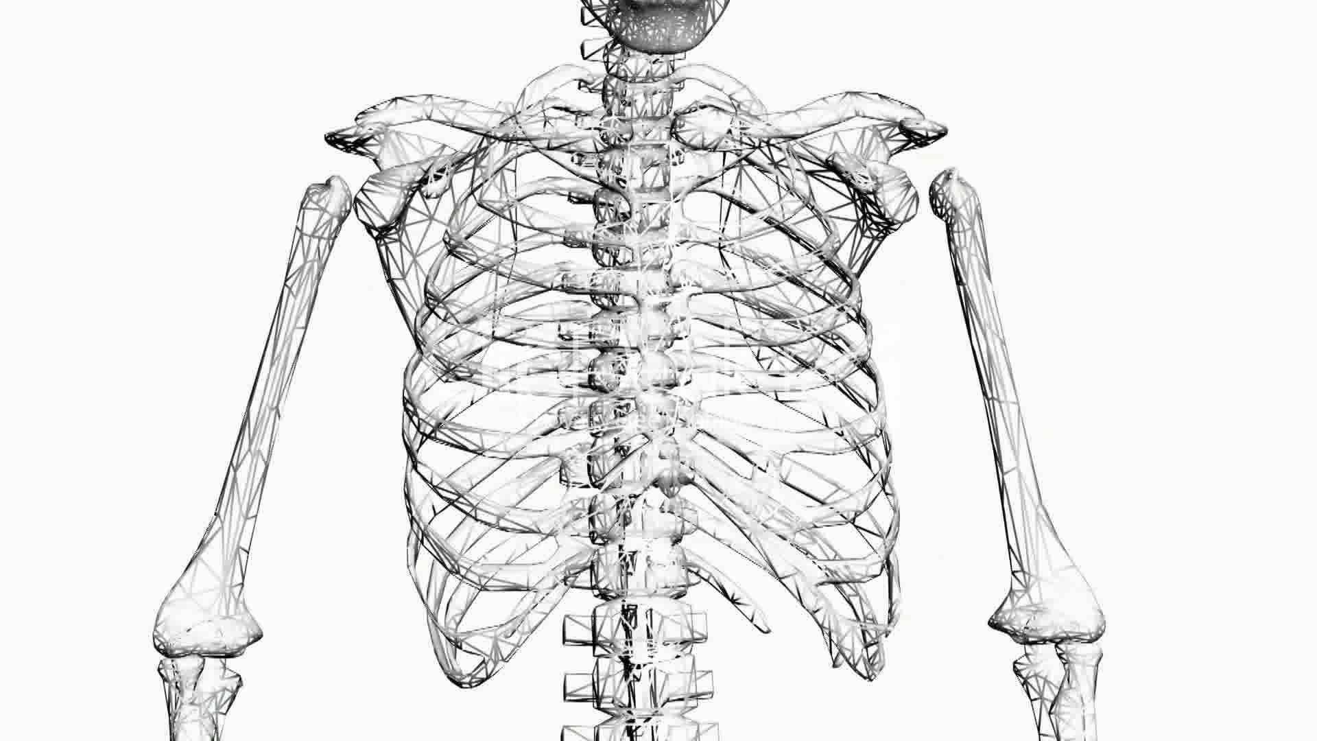 Rotation Of 3d Skeleton Ribs Chest Anatomy Human Medical Body Skull
