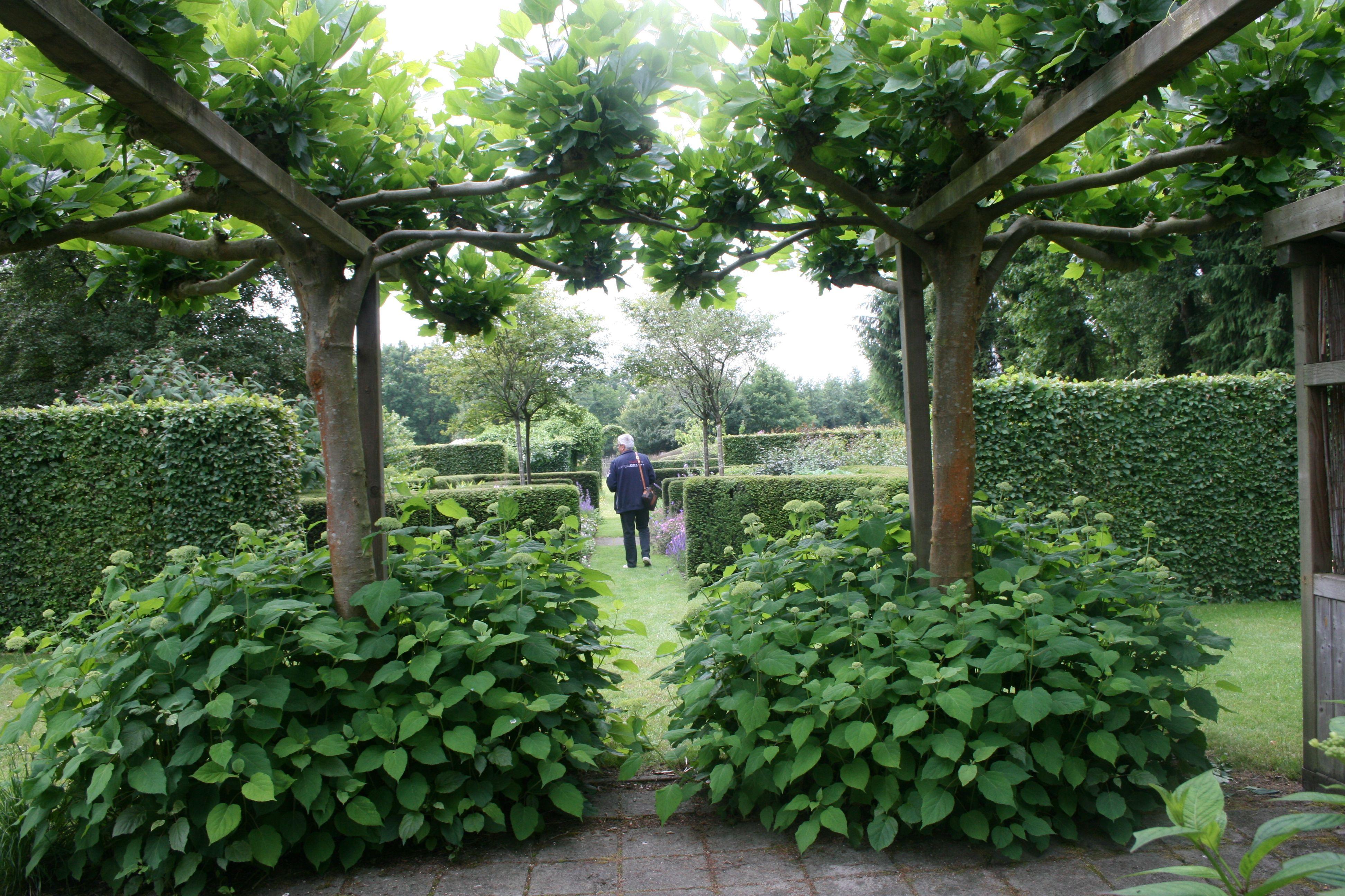 Hortensien Dachplatanen Gartenreise Holland Belgien Garten Pflanzen Garten Gartengestaltung