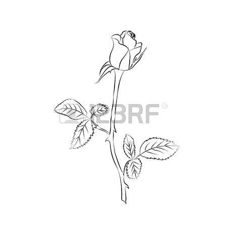 Rose Buds Rose Sketch Black Outline On White Background Vector Illustration Rose Bud Tattoo Rose Flower Tattoos Rose Buds