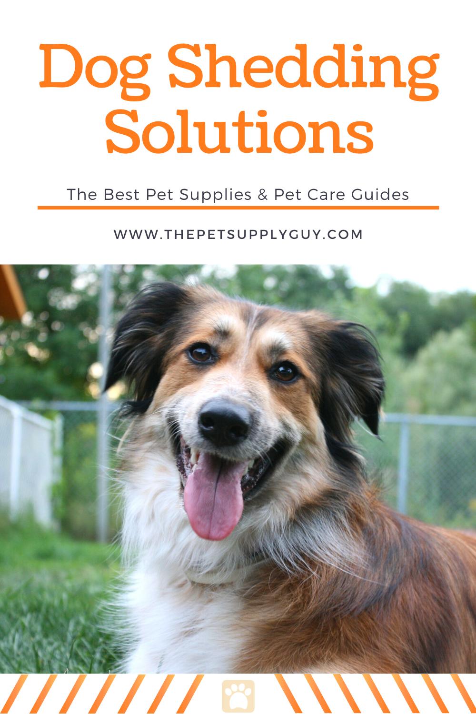 Best Brush For Heavy Shedding Dog Fluffy S Reviews Dog Shedding Deshedding Dog Dogs