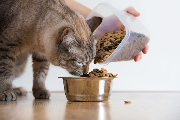 How Can You Make Mealtime Fun For Your Cats? (With images