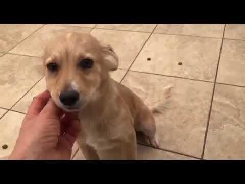 Karlos Ein Hund In Not Aus Dem Tierschutz Youtube Hunde In Not Hunde Tierschutz