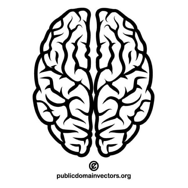 Brain Vector Image Brain Vector Brain Illustration Brain Drawing