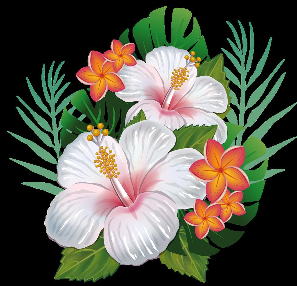 8 Png Wattpad Background Flowers Flower Art Hibiscus