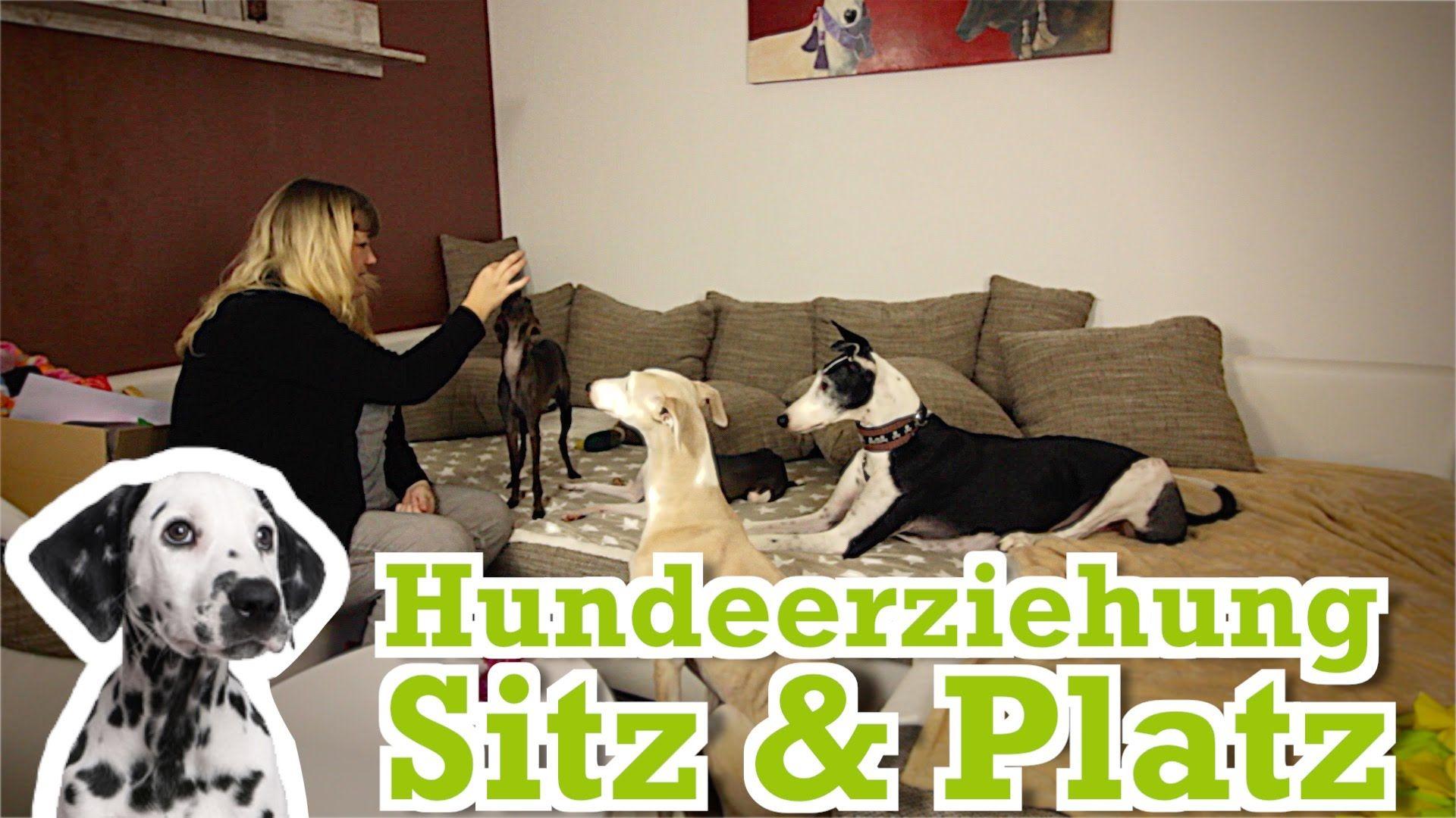 Hundeerziehung: Dem Hund Sitz und Platz beibringen - Hundetraining für Z...